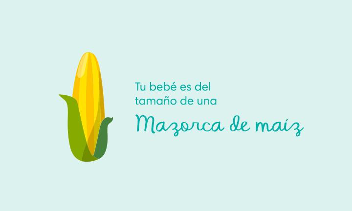 Tu bebé es del tamaño de una mazorca de maíz