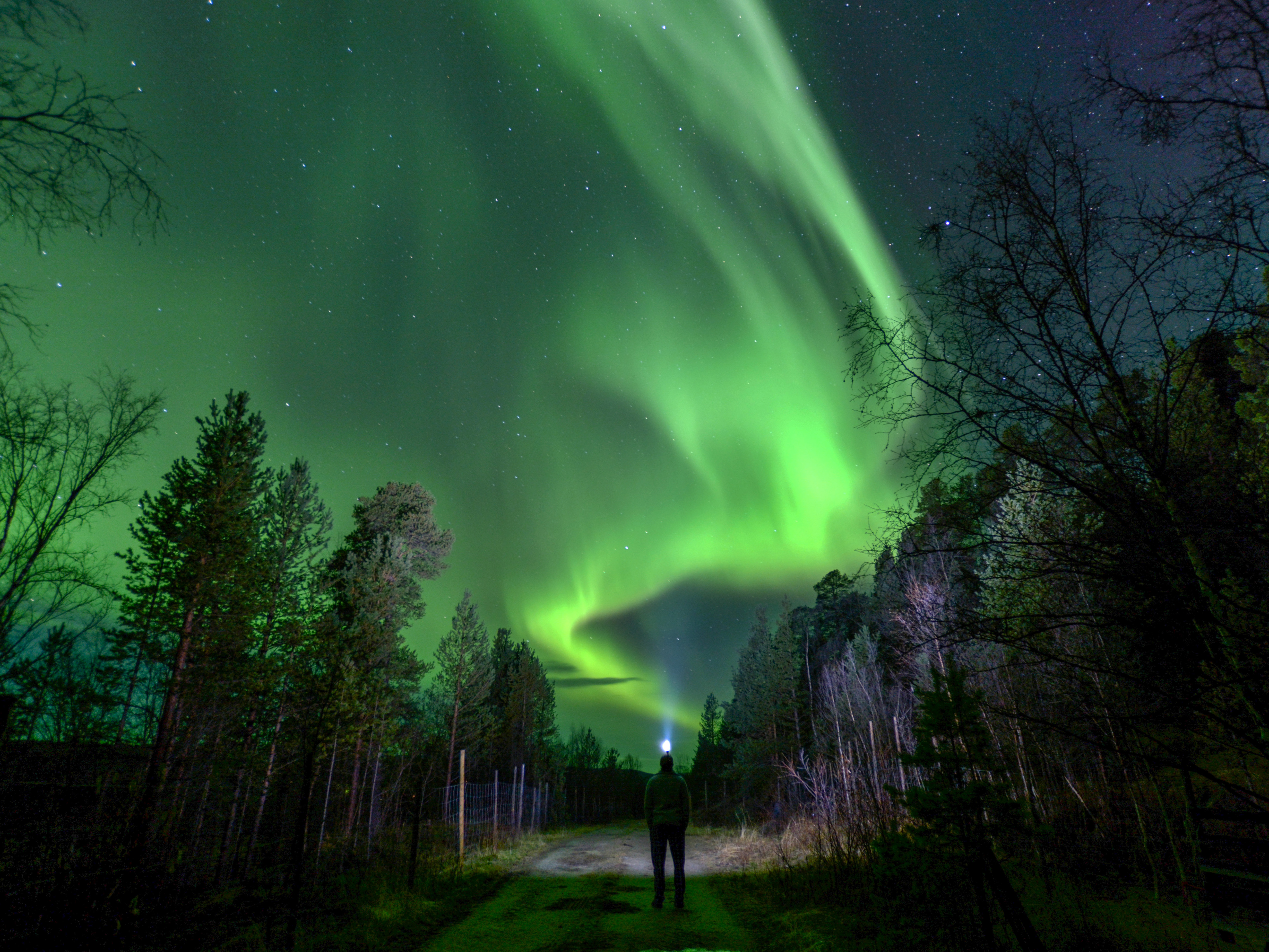 Northern Lights Shutterstock Autumn Forest