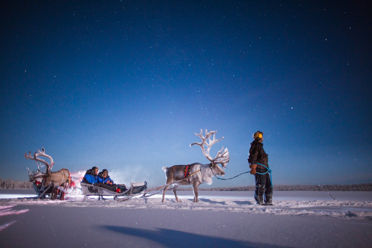 Reindeer sledding at Harriniva