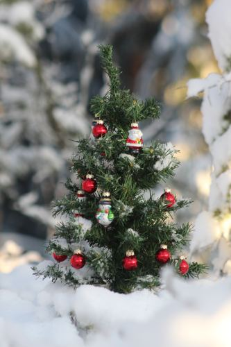 Christmas Tree in Finland