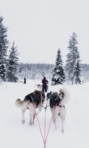 Finland Dogsledding