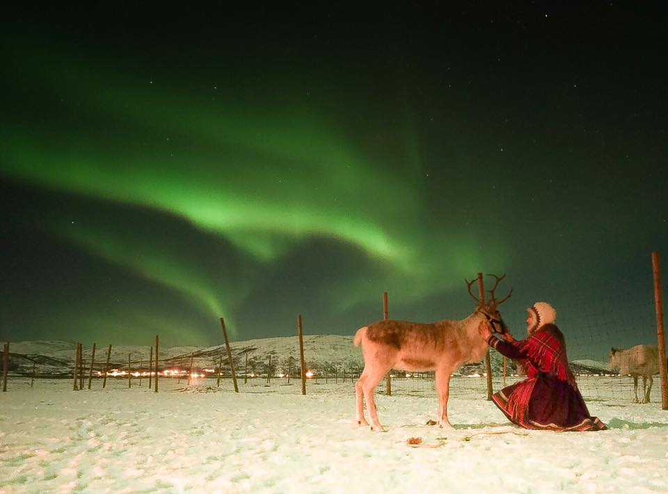 Reindeer Sami Northern Lights