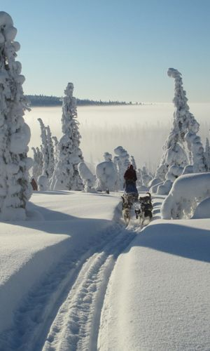 Dogsledding in Sweden