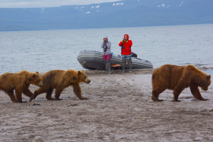 Bears in Kamchatka, Credit: Scott Stallard