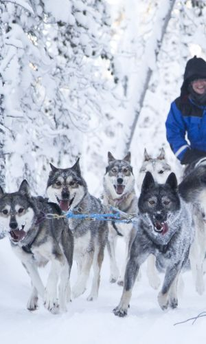 Husky Riding on Lapland Arctic Highlights tour