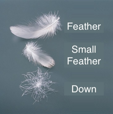 Down Versus Feather