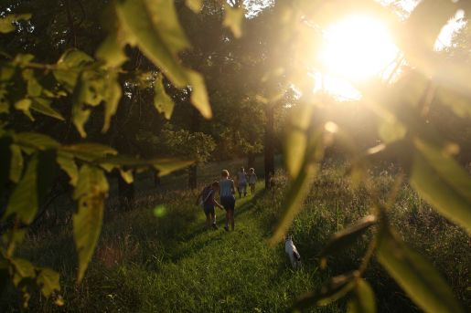 People walking in a wood with the sun shining through the trees