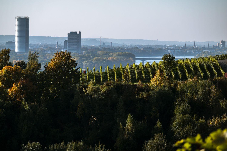Die Stadt Bonn aus der Ferne mit dem Rhein