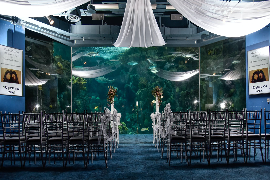 How to Create an Under the Sea Wedding Theme