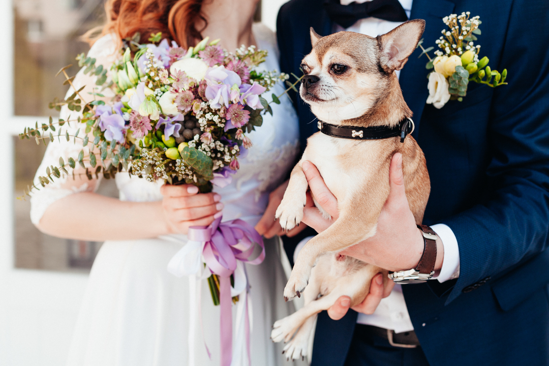 How to Incorporate Your Dog in Wedding Ceremony | Zola