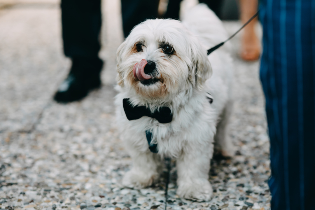 11 Tips for Having a Wedding With Dogs Involved | Zola
