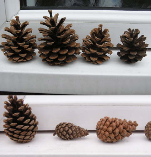 Pinecone Weather Station