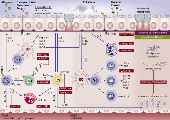 Figure-1--Immuneinflammatory-pathways-underlying-(severe)-asthma