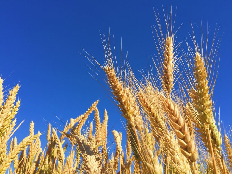 Image for Article: Lander & Rogers advises NYSE-Listed Arthur J. Gallagher on the acquisition of AgriRisk Services