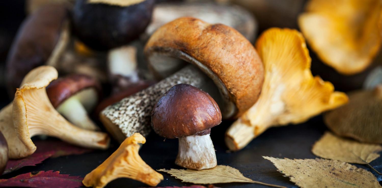 funghi ristoranti firenze toscana piatti mangiare