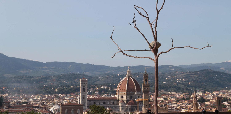 Prospettiva Vegetale - Giuseppe Penone, Firenze 2014