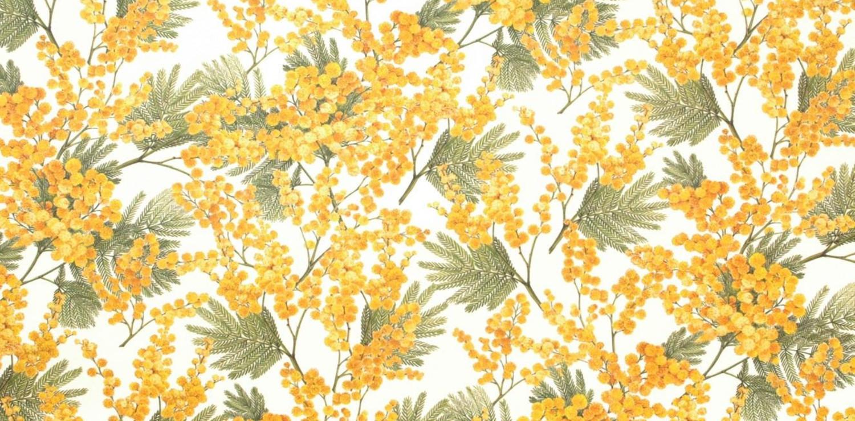 mimosa festa della donna firenze