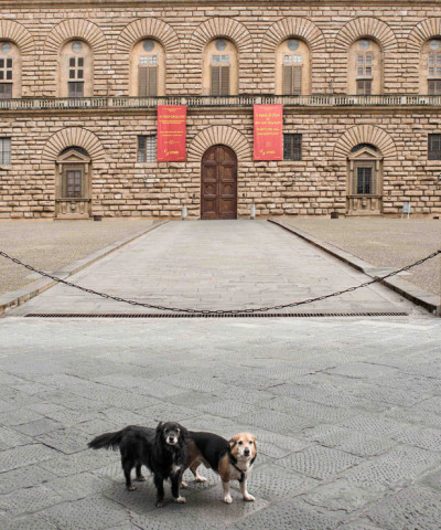 marco lanza photo coronavirus dogs florence