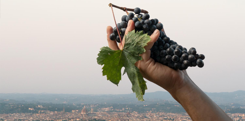 05 - Dalla cantina di Bibi Graetz che domina Firenze
