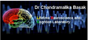 Lifespan Neuroscience and Cognition Laboratory logo
