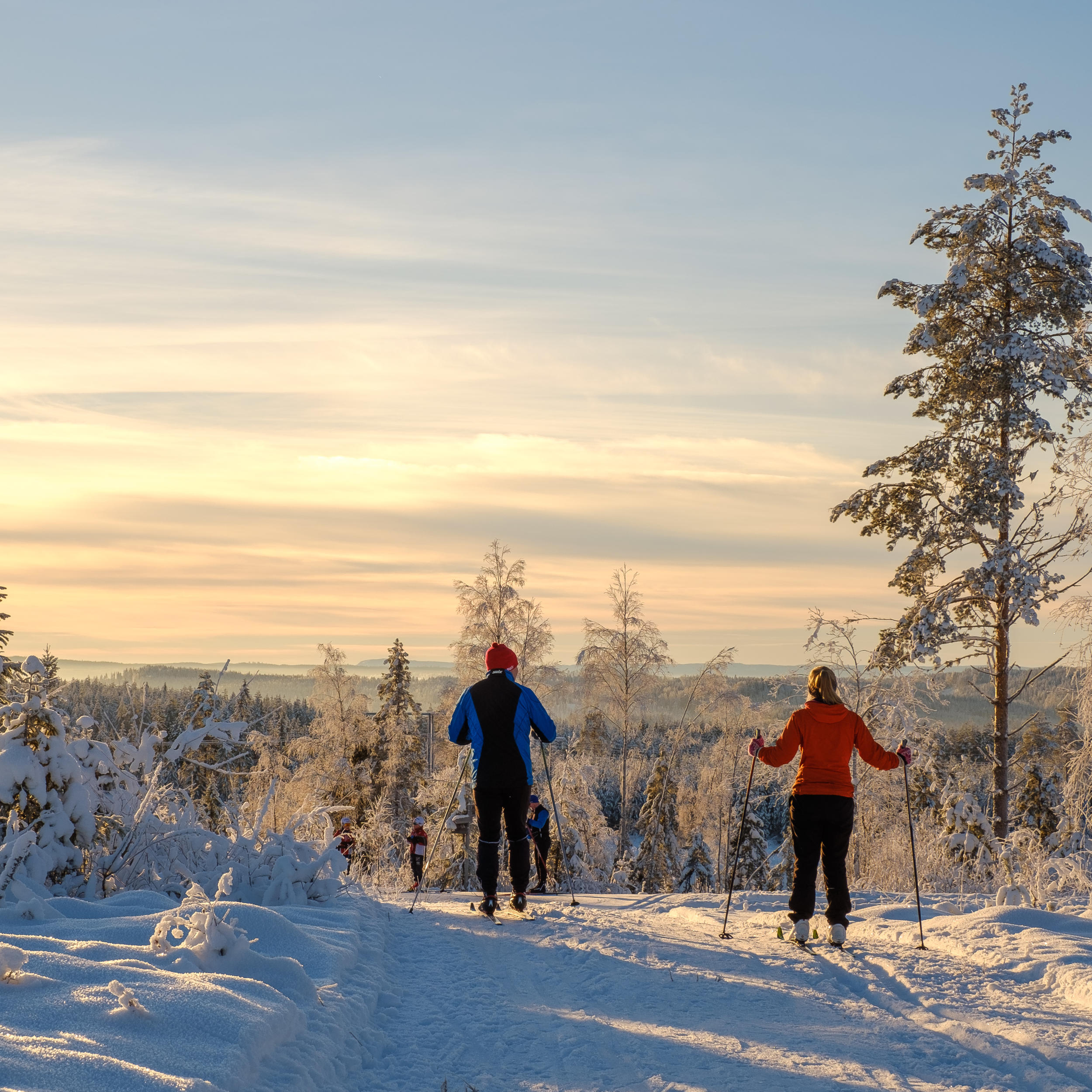 Cross country skiing in Elverum, Norway
