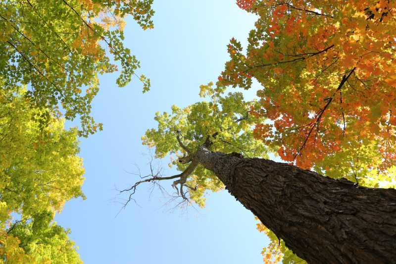 Image of trees from a low angle