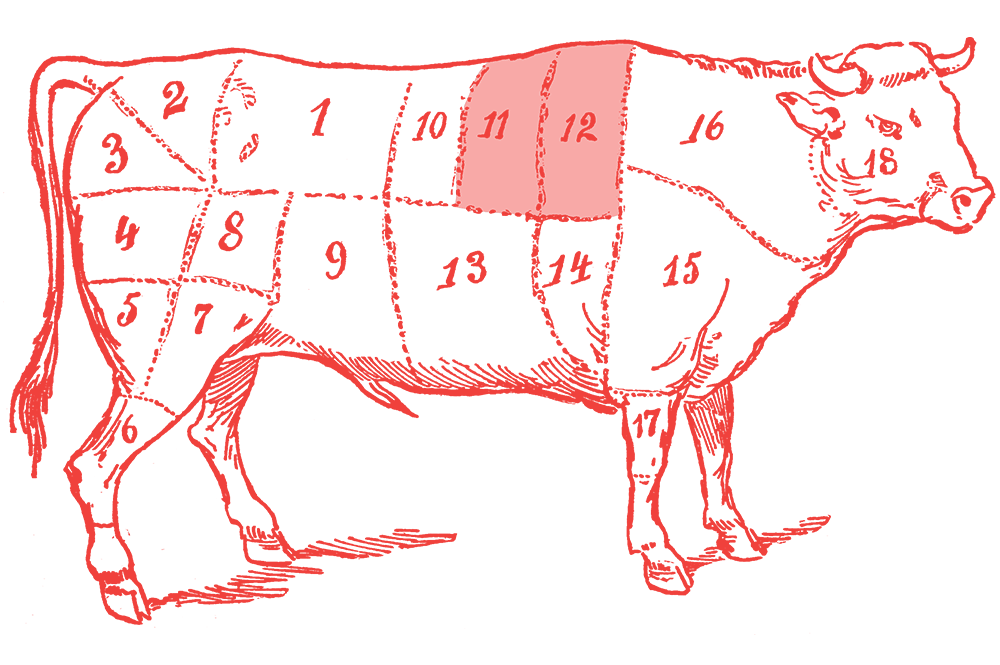 Illustration of a cow with the ribeye section highlighted