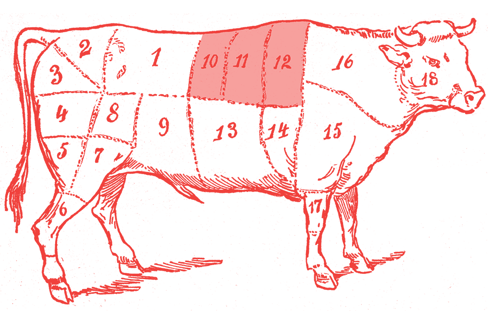 Illustration of a cow with the galbi section highlighted