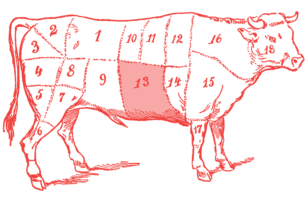Illustration of a cow with the skirt section highlighted