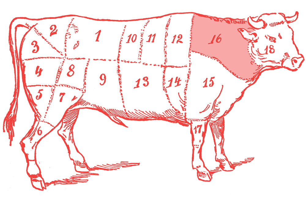 Illustration of a cow with the flatiron section highlighted