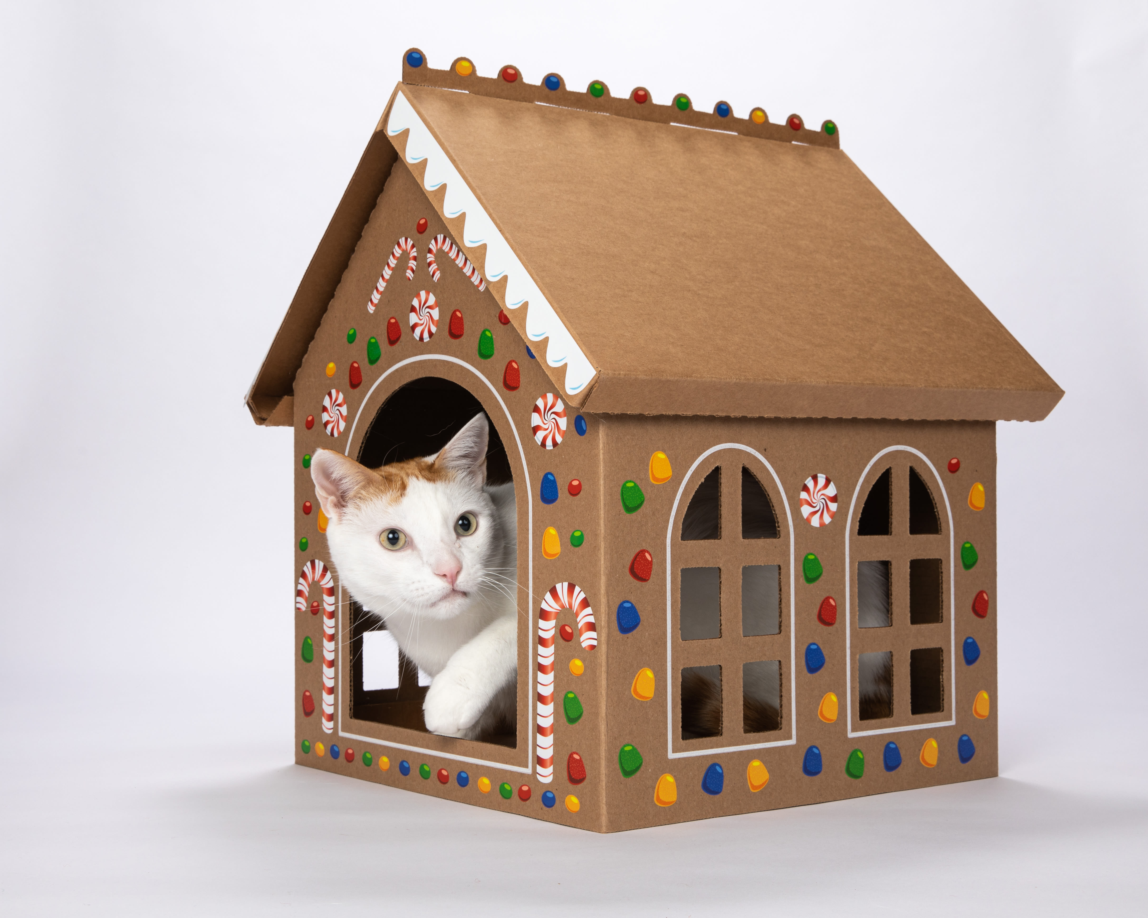 Cat is in the Box Gingerbread House