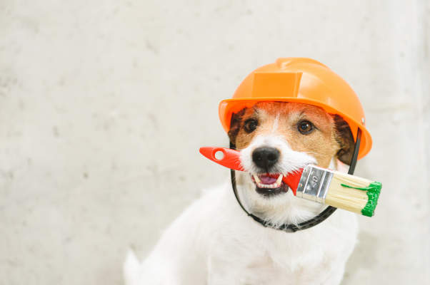 Canva - Dog as funny house painter with paintbrush against concrete wall