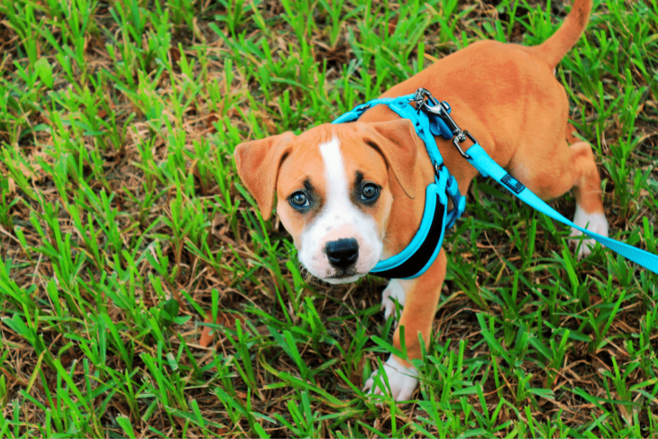 The 18 Best Collars & Harnesses For Your Dog