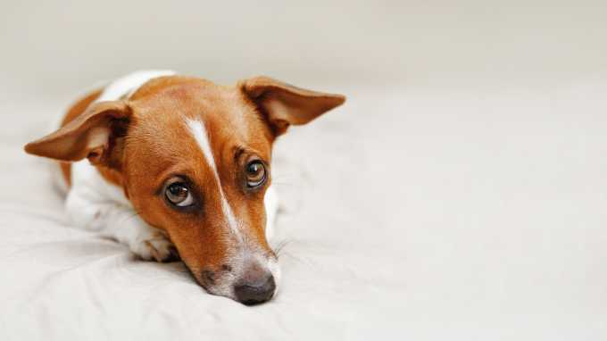 Dog Diarrhea: Why Does Your Dog Have It? How Can You Stop It?