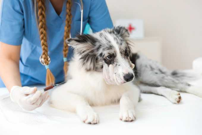 NYC: Keep Up With Your Dog's Rabies Vaccine