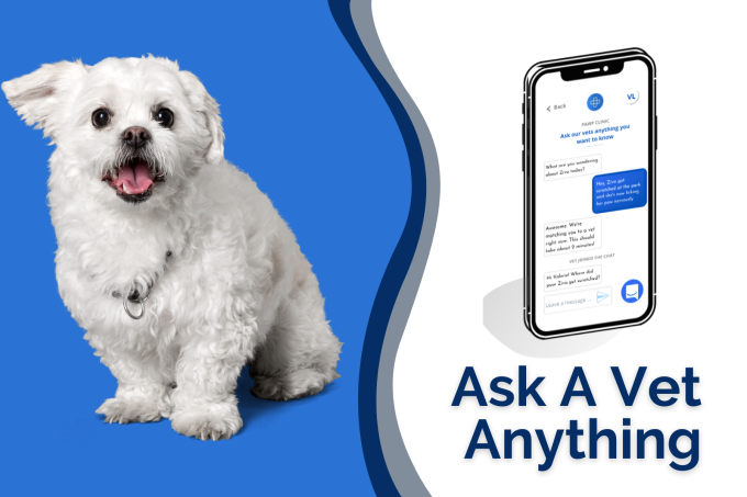 Ask A Vet: Pawp Online Vets Talk Puppy Vaccinations, Kidney Disease & More