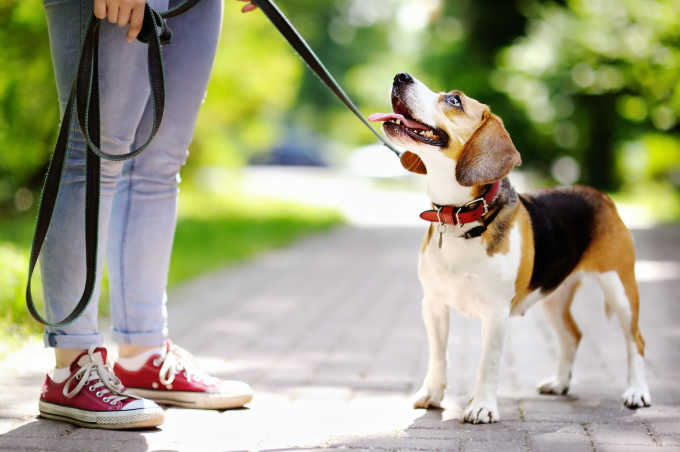 10 Best Dog Training Schools In NYC, For Every Kind Of Pup