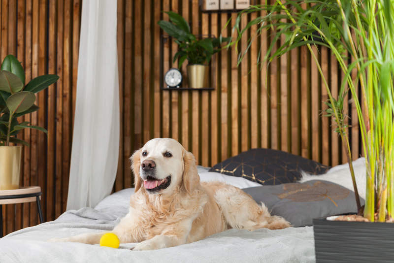 10 Best Pet-Friendly Hotels In San Francisco