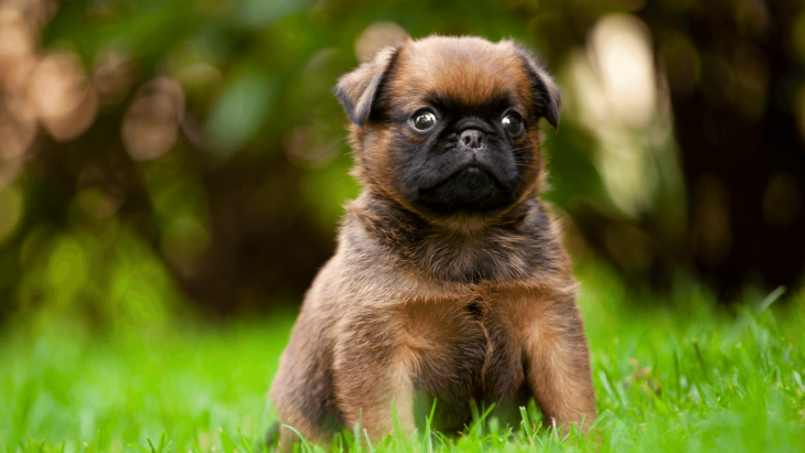 Why Does My Dog Eat Grass? Causes, Prevention & When To Worry