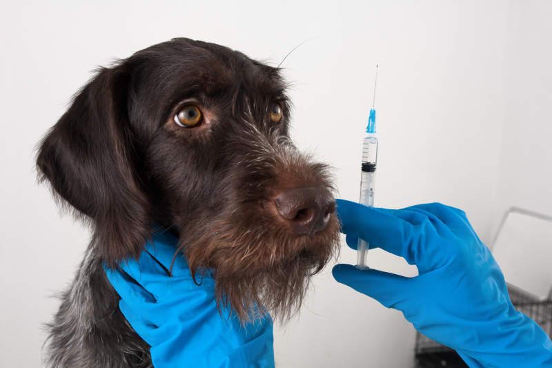 Should I Get My Dog Vaccinated?