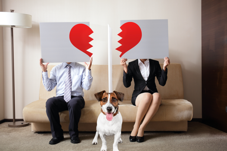 Who Gets The Dog? A Guide To Co-Parenting A Pet After A Relationship Ends