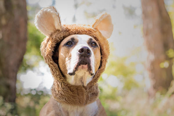 Canva - Beautiful dog portrait in bear hat photographed outdoors.