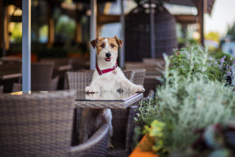 10 Pet-Friendly Restaurants In NYC Where You Can Bring Your Dog
