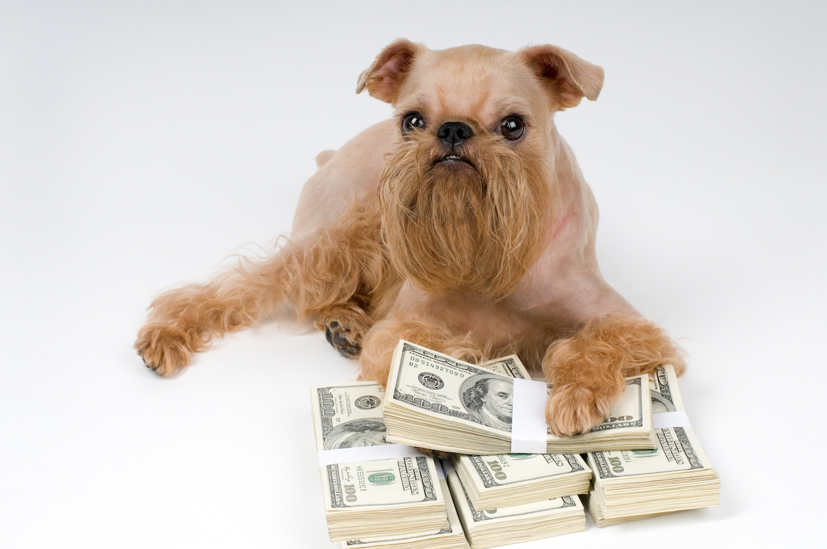 Canva - Dog and heap money