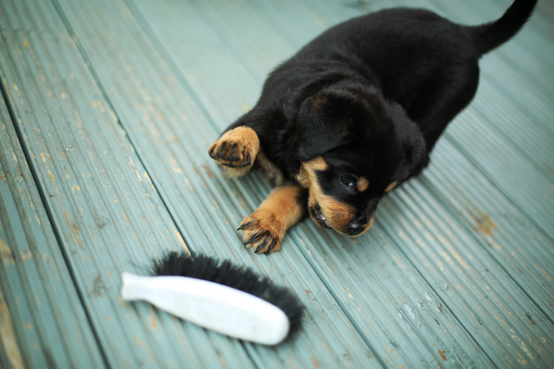 Canva - Puppy Playing with Brush