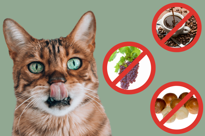11 Human Foods That Are Toxic To Cats