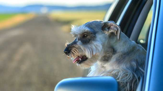 5 Tips For Dog-Friendly Road Trips