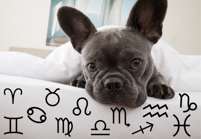 Your Dog's Weekly Horoscope 2019: December 9-15