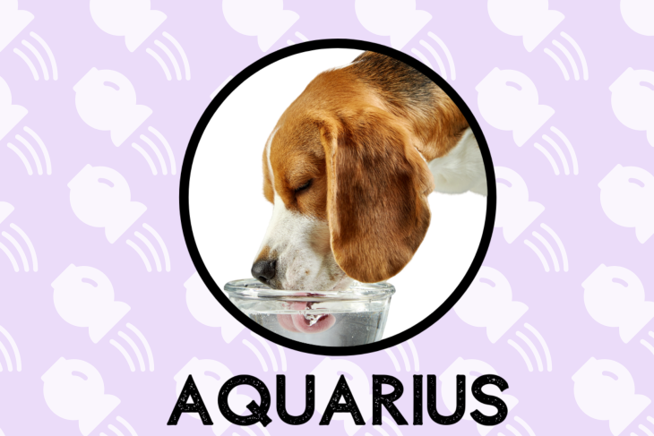 Aquarius Dog Personality: What Being An Aquarius Says About Your Dog