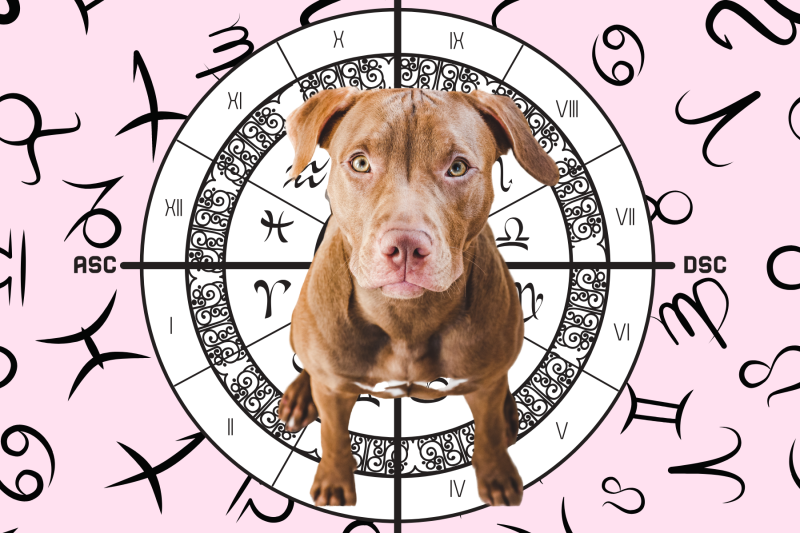 Your Dog's Weekly Horoscope 2020: June 1-7